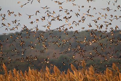 swallows-close2