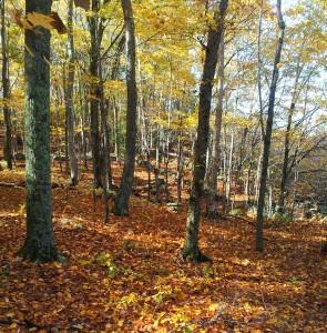 Hartman Park Fall